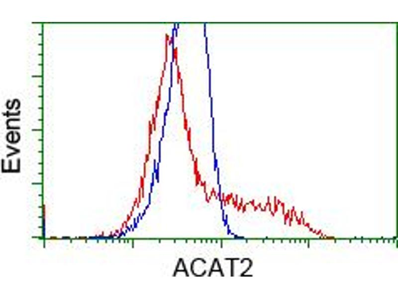 Image no. 3 for anti-Acetyl-CoA Acetyltransferase 2 (ACAT2) antibody (ABIN1496401)