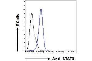 Image no. 4 for anti-Signal Transducer and Activator of Transcription 3 (Acute-Phase Response Factor) (STAT3) (C-Term) antibody (ABIN184593)