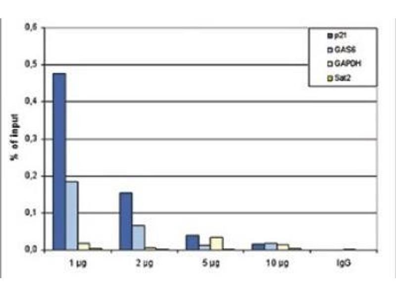 Immunoprecipitation (IP) image for anti-Tumor Protein P53 (TP53) antibody (ABIN5078594)