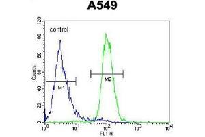 Flow Cytometry (FACS) image for anti-Angiopoietin 2 (ANGPT2) (AA 409-440), (C-Term) antibody (ABIN950412)