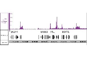 Image no. 2 for anti-Polymerase (RNA) II (DNA Directed) Polypeptide F (POLR2F) antibody (ABIN6972606)