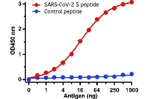 Image no. 2 for anti-SARS-CoV-2 Spike S2 (C-Term) antibody (ABIN1030641)