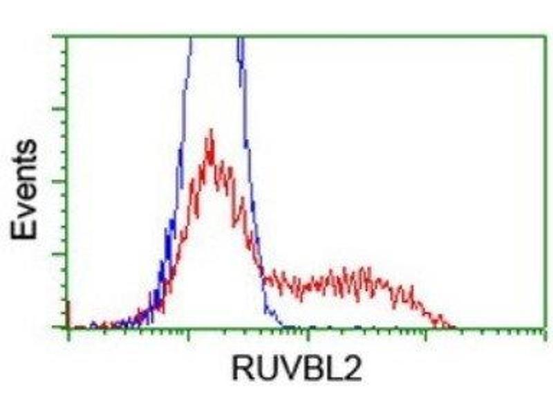 Flow Cytometry (FACS) image for anti-RuvB-Like 2 (E. Coli) (RUVBL2) antibody (ABIN4351488)