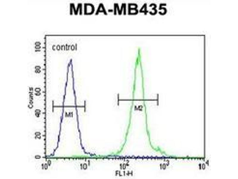 Flow Cytometry (FACS) image for anti-Interleukin 12b (IL12B) (AA 271-298), (C-Term) antibody (ABIN952920)