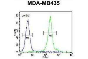 Flow Cytometry (FACS) image for anti-IL12B antibody (Interleukin 12b) (AA 271-298) (ABIN952920)