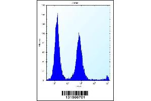 Image no. 1 for anti-Polymerase (RNA) II (DNA Directed) Polypeptide G (POLR2G) (C-Term) antibody (ABIN2494793)
