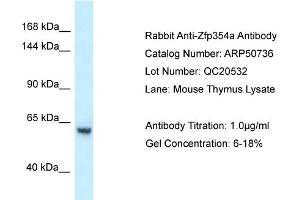 Image no. 1 for anti-Zinc Finger Protein 354A (ZNF354A) (C-Term) antibody (ABIN2784310)