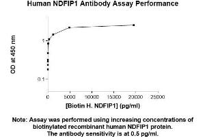 Image no. 1 for anti-Nedd4 Family Interacting Protein 1 (NDFIP1) (AA 1-116) antibody (ABIN5565940)