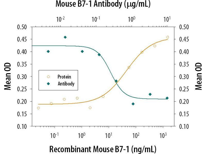 Neutralization (Neut) image for anti-CD80 (CD80) (AA 37-245) antibody (ABIN4900307)