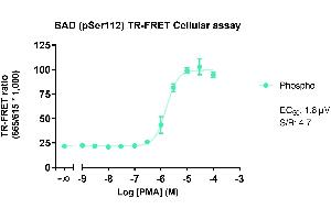 Image no. 1 for Phospho-BAD (S112) TR-FRET Cellular Assay Kit (ABIN6938981)