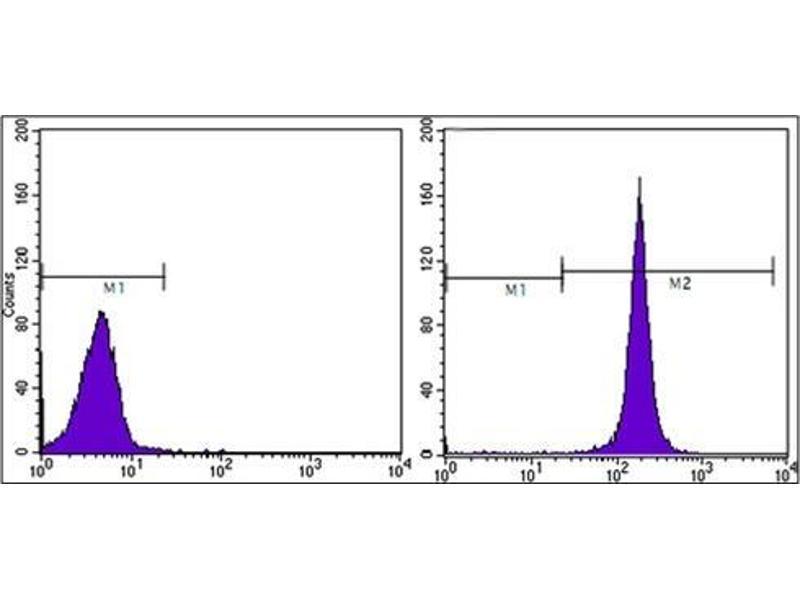 Flow Cytometry (FACS) image for anti-CD44 antibody (CD44) (AA 628-699) (ABIN782357)