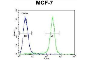 Image no. 2 for anti-Complement Component 1, Q Subcomponent-Like 4 (C1QL4) (AA 7-36), (N-Term) antibody (ABIN950859)