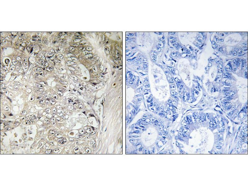 Image no. 1 for anti-Cystatin SN (CST1) antibody (ABIN1575888)