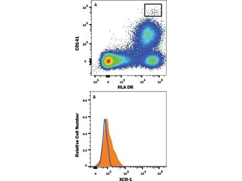 Flow Cytometry (FACS) image for anti-XCR1 antibody (Chemokine (C Motif) Receptor 1) (AA 1-31) (Alexa Fluor 488) (ABIN4897810)