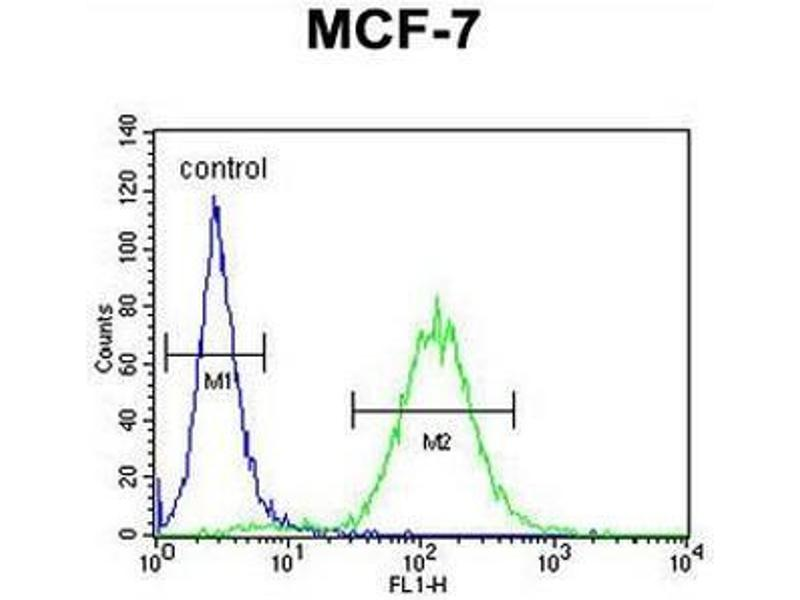 Flow Cytometry (FACS) image for anti-CES2 (AA 343-373), (Middle Region) antibody (ABIN951482)