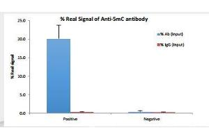Methylated DNA Immunoprecipitation (MeDIP) image for anti-5mC antibody (ABIN3071645)
