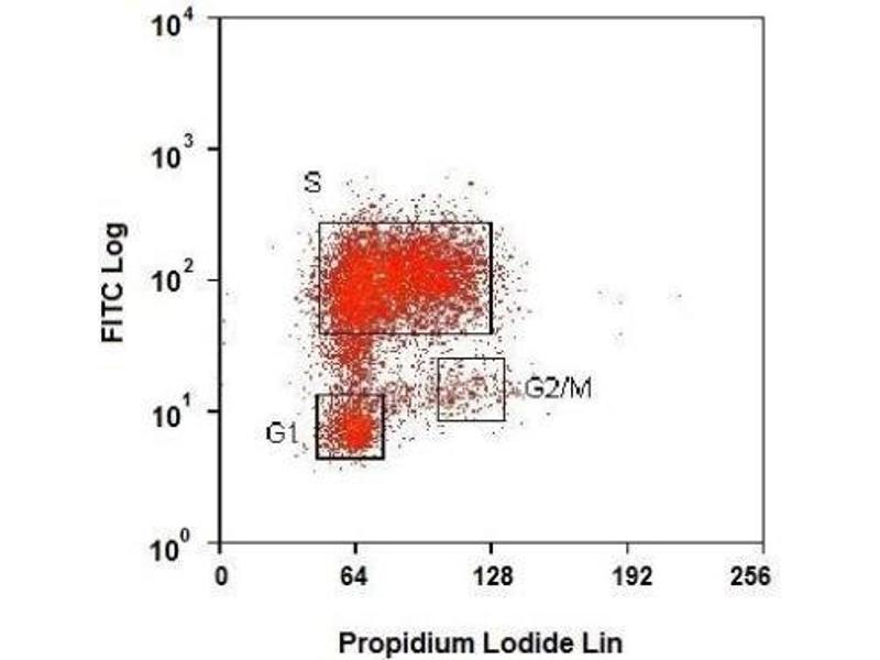 Flow Cytometry (FACS) image for anti-BrdU antibody (Bromodeoxyuridine) (ABIN152983)