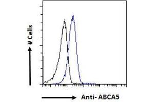 Image no. 1 for anti-ATP-Binding Cassette, Sub-Family A (ABC1), Member 5 (ABCA5) (Internal Region) antibody (ABIN302142)