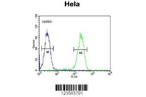 Flow Cytometry (FACS) image for anti-Ubiquitin A-52 Residue Ribosomal Protein Fusion Product 1 (UBA52) (AA 100-128), (C-Term) antibody (ABIN654135)