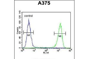 Image no. 3 for anti-Family with Sequence Similarity 96, Member B (FAM96B) (AA 16-45), (N-Term) antibody (ABIN5538943)