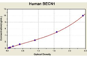 Image no. 1 for Beclin 1, Autophagy Related (BECN1) ELISA Kit (ABIN1113698)