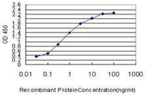 anti-Isocitrate Dehydrogenase 2 (NADP+), Mitochondrial (IDH2) (AA 354-452) antibody (2)