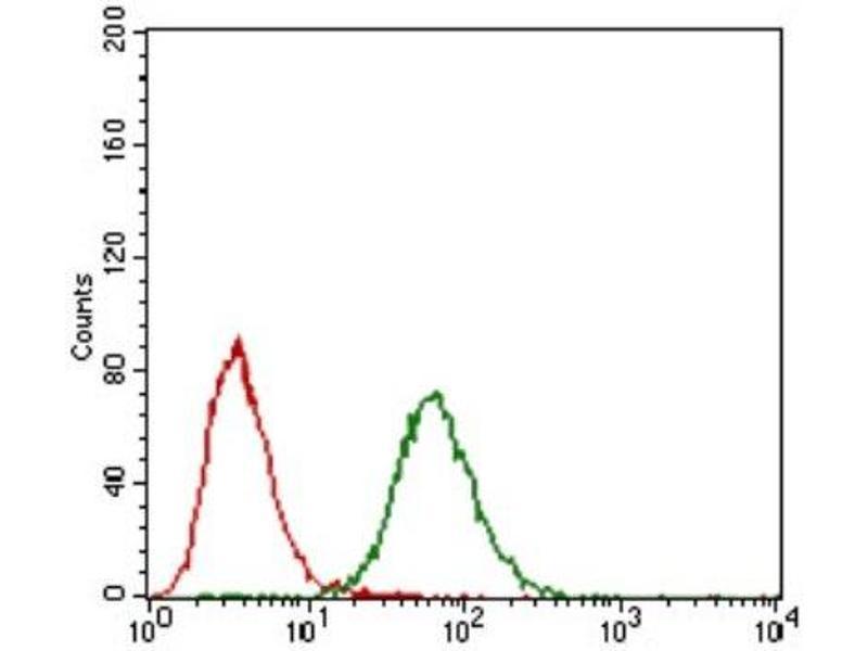 Flow Cytometry (FACS) image for anti-Fibroblast Growth Factor 4 (FGF4) antibody (ABIN4272082)
