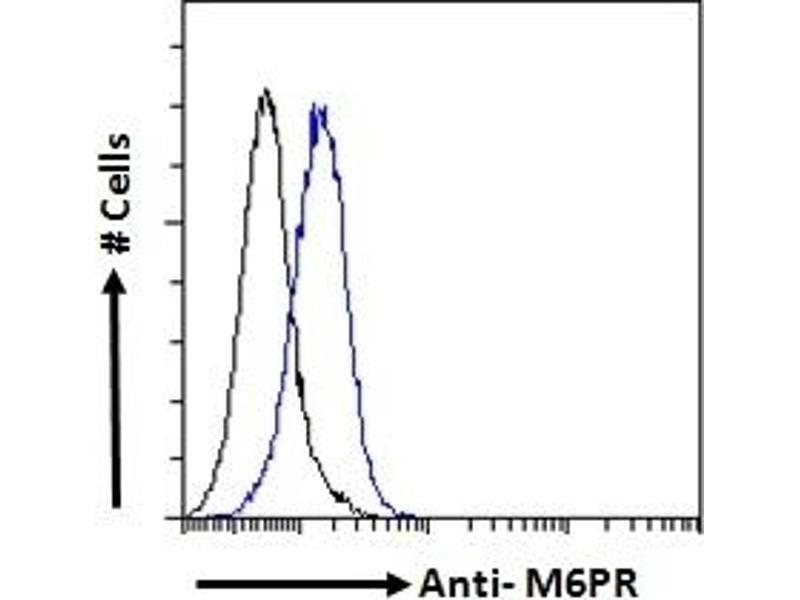 Image no. 1 for anti-Mannose-6-Phosphate Receptor (Cation Dependent) (M6PR) (Internal Region) antibody (ABIN238667)