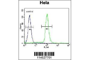 Image no. 3 for anti-Growth Differentiation Factor 6 (GDF6) (N-Term) antibody (ABIN2440673)
