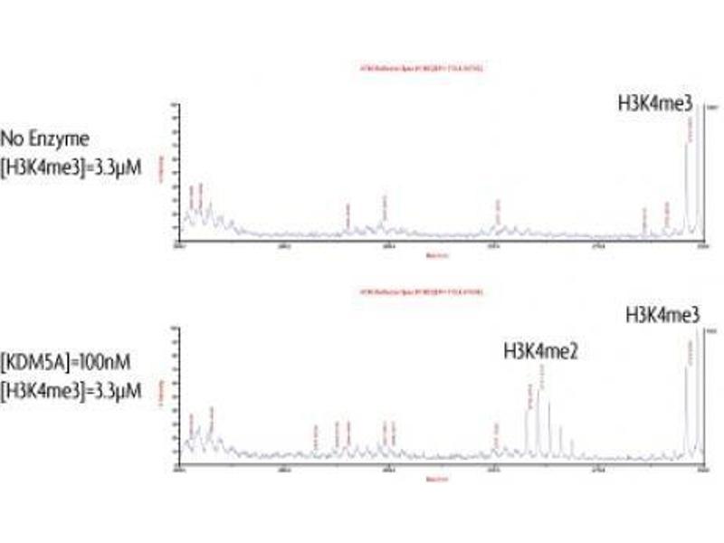 Activity Assay (AcA) image for Lysine (K)-Specific Demethylase 5A (KDM5A) protein (DYKDDDDK Tag) (ABIN2669680)