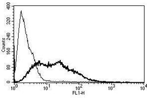 Image no. 1 for anti-Vascular Cell Adhesion Molecule 1 (VCAM1) antibody (ABIN1383722)