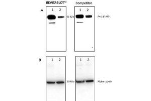 Image no. 1 for Revitablot™ Western Blot Stripping Buffer (ABIN1607927)