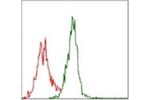 Flow Cytometry (FACS) image for anti-Argininosuccinate Synthase 1 (ASS1) antibody (ABIN1105454)