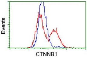 Flow Cytometry (FACS) image for anti-CTNNB1 antibody (Catenin (Cadherin-Associated Protein), beta 1, 88kDa) (ABIN2454136)