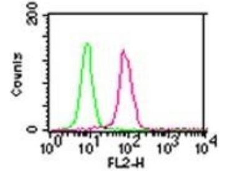 Flow Cytometry (FACS) image for anti-conserved Helix-Loop-Helix Ubiquitous Kinase (CHUK) antibody (ABIN4324239)