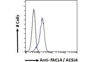 Image no. 1 for anti-Acyl-CoA Synthetase Long-Chain Family Member 4 (ACSL4) (C-Term) antibody (ABIN184846)