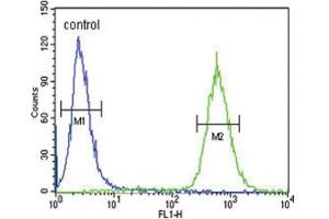 Image no. 3 for anti-Glial Cell Line Derived Neurotrophic Factor (GDNF) antibody (ABIN3003865)