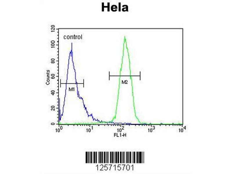 Flow Cytometry (FACS) image for anti-C-Type Lectin Domain Family 2, Member B (CLEC2B) (AA 59-86), (Center) antibody (ABIN650966)