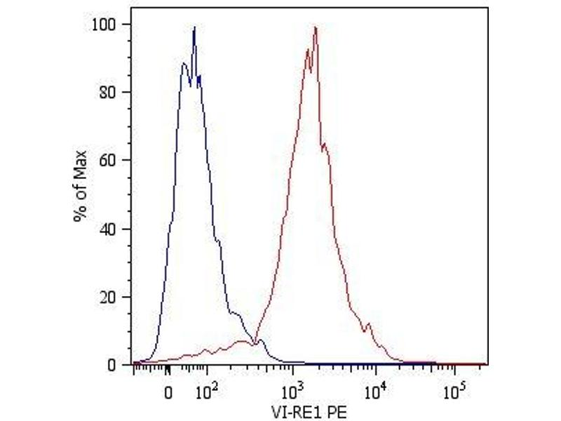 Image no. 2 for anti-Vimentin (VIM) antibody (ABIN94494)