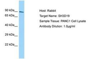 Image no. 1 for anti-SH3 Domain Containing 19 (SH3D19) (AA 610-659) antibody (ABIN6750137)