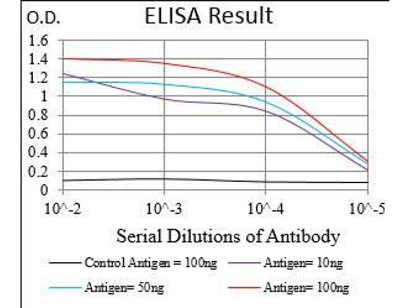 Image no. 5 for anti-Dynamin 1-Like (DNM1L) (AA 69-213) antibody (ABIN1724907)