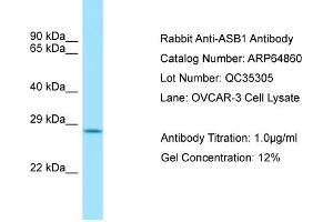 Image no. 1 for anti-Ankyrin Repeat and SOCS Box-Containing 1 (ASB1) (C-Term) antibody (ABIN2789983)