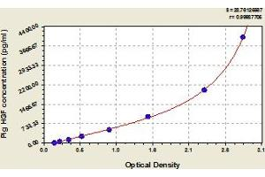 Image no. 1 for Hepatocyte Growth Factor (Hepapoietin A, Scatter Factor) (HGF) ELISA Kit (ABIN6975922)