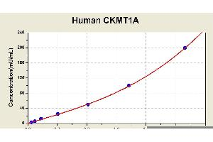Image no. 1 for Creatine Kinase, Mitochondrial 1A (CKMT1A) ELISA Kit (ABIN1114411)