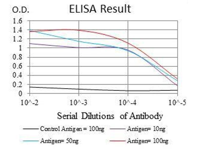 ELISA image for anti-Ribosomal Protein S6 Kinase, 90kDa, Polypeptide 3 (RPS6KA3) antibody (ABIN969386)