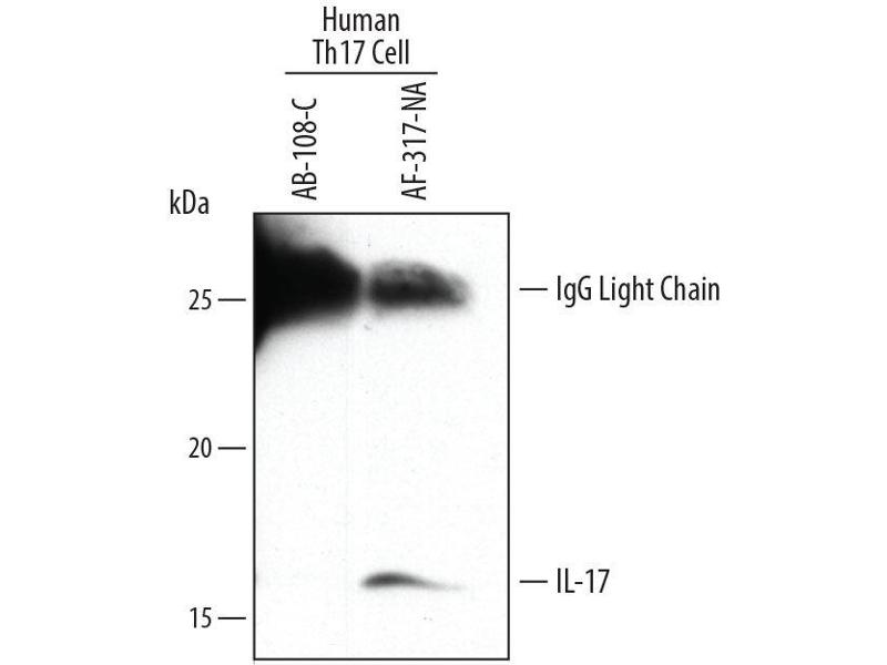 Immunoprecipitation (IP) image for anti-Interleukin 17A (IL17A) (AA 20-155) antibody (ABIN4900592)
