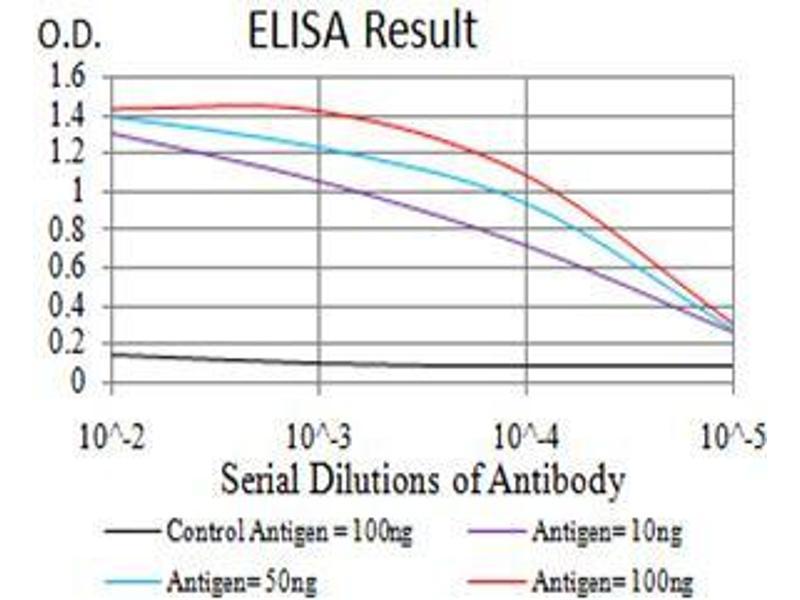 ELISA image for anti-AKT antibody (V-Akt Murine Thymoma Viral Oncogene Homolog 1) (AA 1-150) (ABIN5542263)