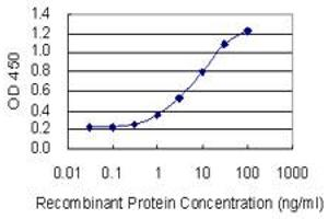 Image no. 1 for anti-Cytochrome P450, Family 1, Subfamily A, Polypeptide 2 (CYP1A2) (AA 211-310) antibody (ABIN947768)