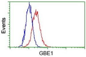 Image no. 2 for anti-Glucan (1,4-alpha-), Branching Enzyme 1 (GBE1) antibody (ABIN1498396)