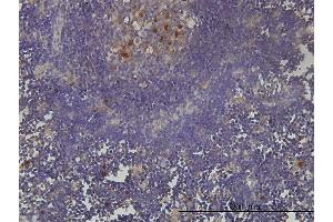 Image no. 3 for anti-PCNA Clamp Associated Factor (PAF) (AA 1-111) antibody (ABIN564218)